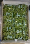 Thompson Seedless Chile